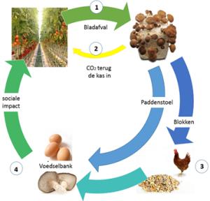 Circular mushroom agriculture