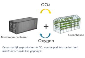 Natuurlijke paddenstoelen CO2 inzetten voor kassenteelt